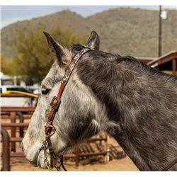 Peach leopard and cactus...